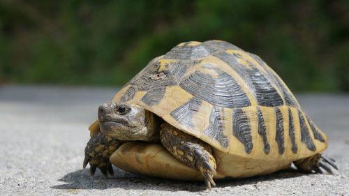 Servidores lentos: Síntomas de que ha disminuido su velocidad